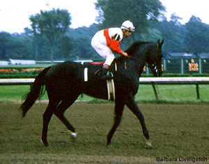 Ruffian Racings Greatest Filly Thoroughbred Greats